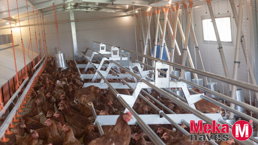 Interior nave para gallinas ecologicas