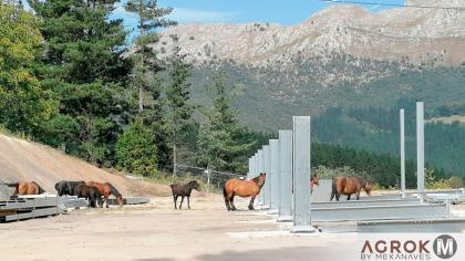 Estructura-metalica-para-nave-caballos